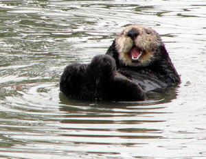 happy grooming sea otter