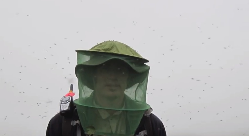 Alaska research insects mosquito netting
