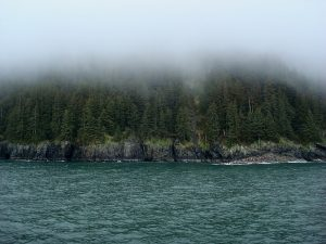 Esther Passage forest view, Prince Williams Sound / Image by Barbara Ann Spengler (Creative Commons Attribution 2.0 Generic license)